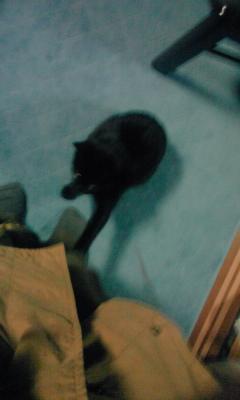黒猫と学ラン